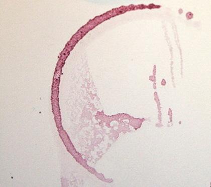 Winestain